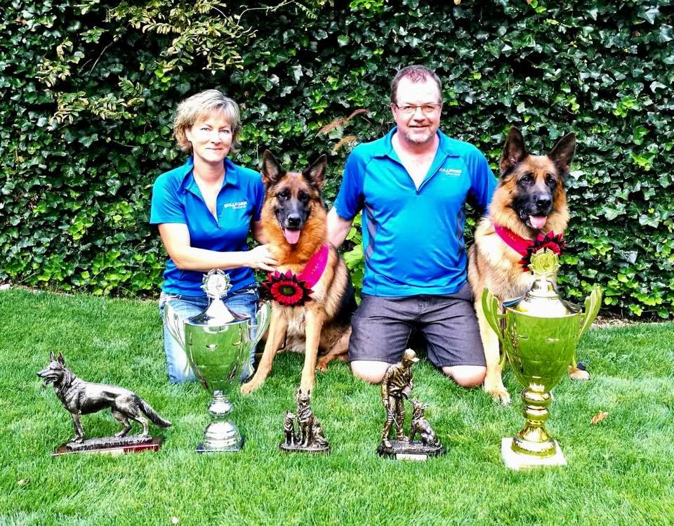 Best German Shepherds Dogs and Puppies breeding since 1986 BC WA